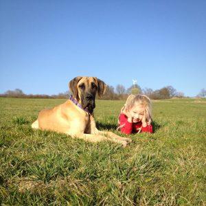 pies wystawiony na działanie promieni słonecznych